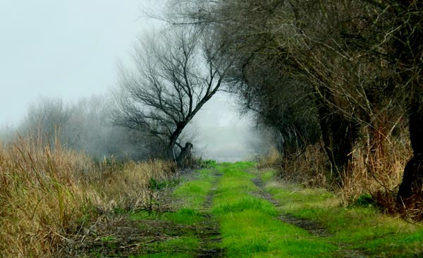 Path into the Fog
