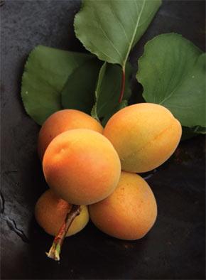 Market Fresh Apricots