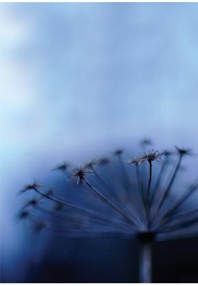Dandelion - Inner Outer Conflict