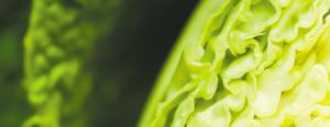 cabbage slider