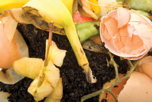 Organic waste for backyard compost